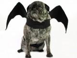 Halloween bat dog costume