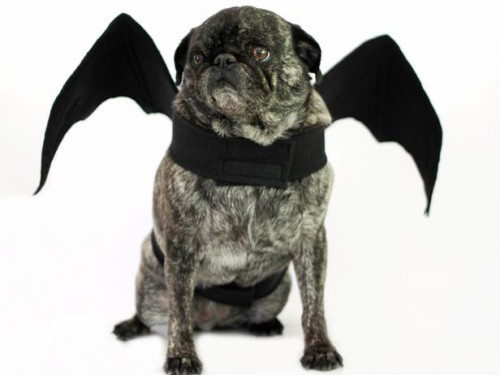 Halloween bat dog costume