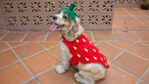 strawberry dog costume (via https:)