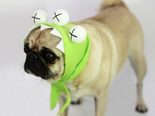 monster Halloween dog costume (via diynetwork)