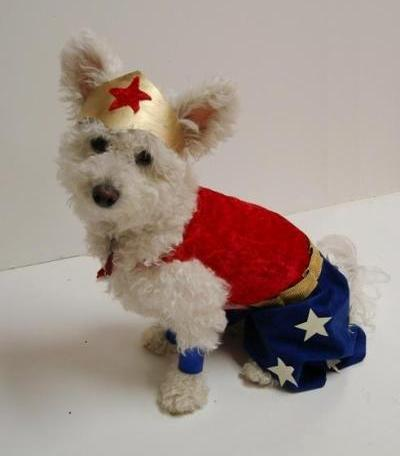 wonder woman dog costume (via niqqi)
