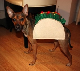 dog taco costume (via smallhomebigstart)