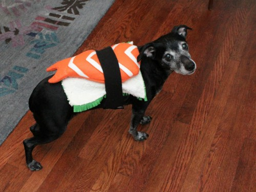 sushi dog costume (via eatsleepmake)