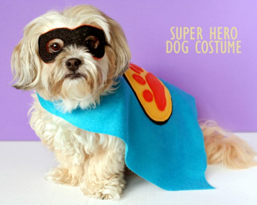 super hero dog costume (via lisastorms)