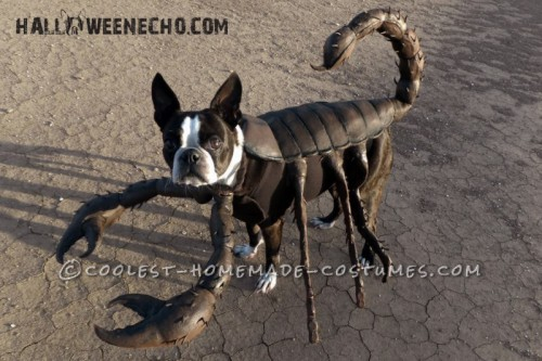 scorpion dog costume (via ideas)