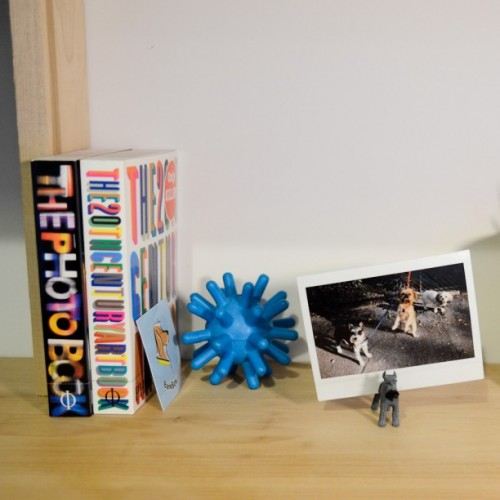 Funny DIY Dog Photo Stands