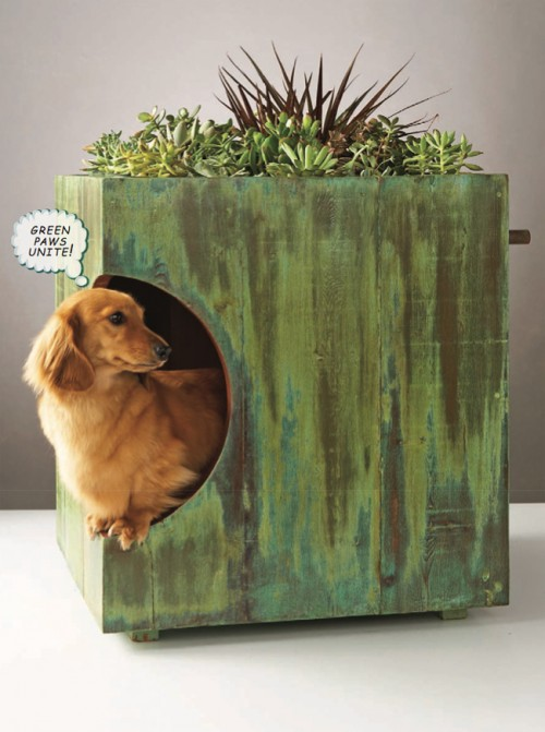 DIY Green Roof For a Dog House
