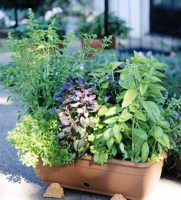 Container Herb Garden (via bhg)