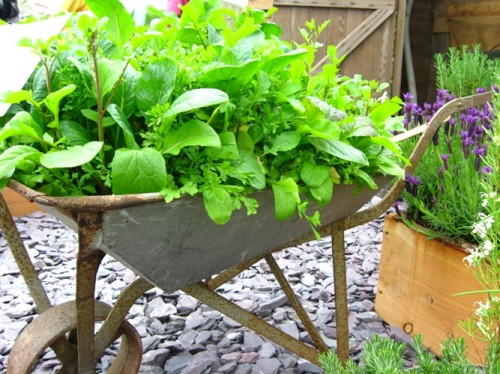 DIY Herb Garden Of An Old Wheelbarrow (via ewainthegarden)