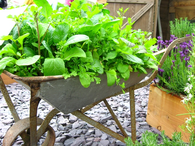 DIY Herb Garden Of An Old Wheelbarrow
