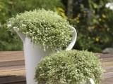 Tea Set Herb Garden
