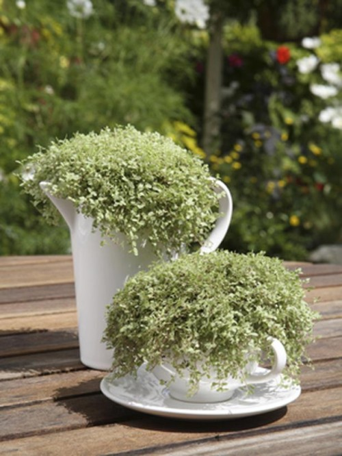 Tea Set Herb Garden (via diynetwork)