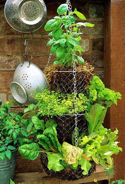 Hanging Basket Herb Garden (via telegraph)