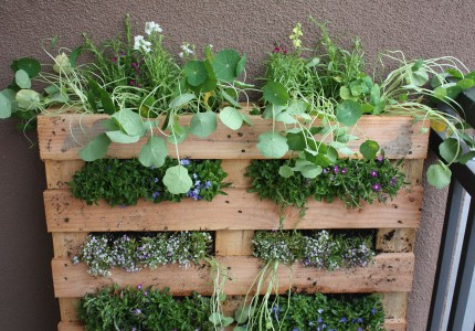 DIY Small Space Vertical Garden Of A Pallet (via Shelterness)