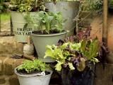 Herb Garden In Buckets