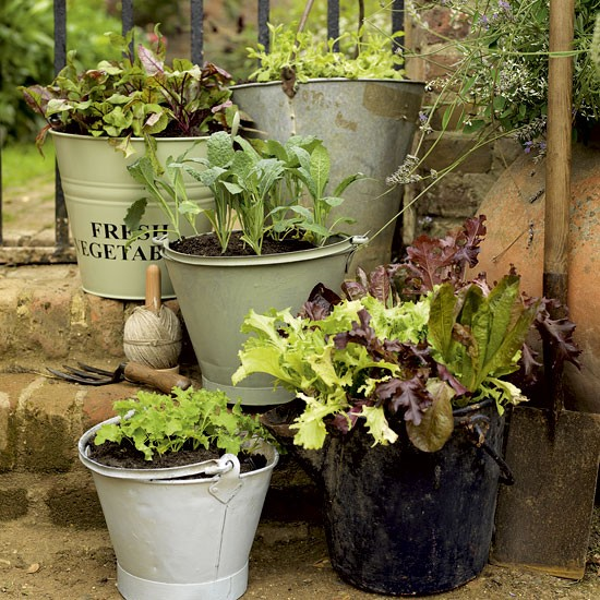 Herb Garden In Buckets