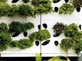 Ultra-Modern Urban Herb Garden