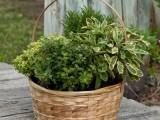 DIY Herb Garden In A Basket
