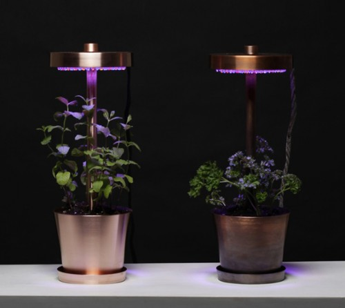 Cooper Lamp Combined With Planter To Grow Herbs at Home