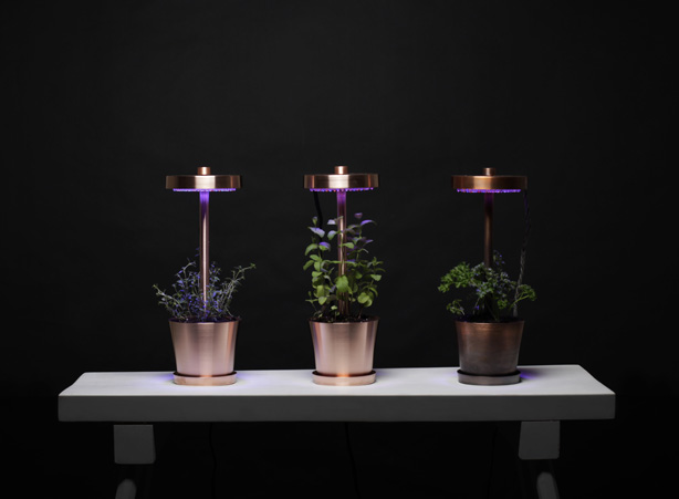 Herb Lamp For Home Garden