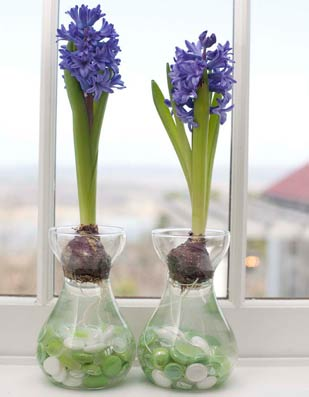 How To Grow Spring Flowers Indoors: 5 DIYs