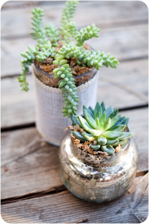 How To Grow Succulent In A Jar