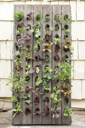 How To Grow Vegetables Vertically Shelterness