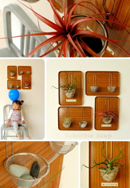 How To Make An Air Plant Display