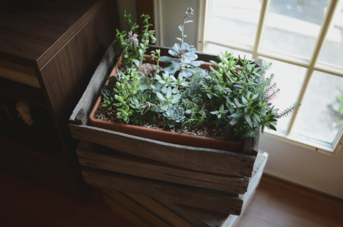 How To Make Crated Succulent Planters