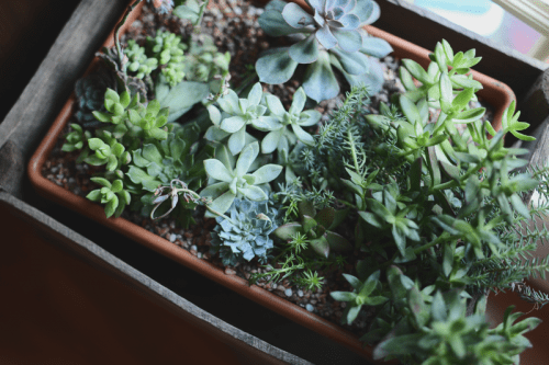 How To Make Crated Succulents