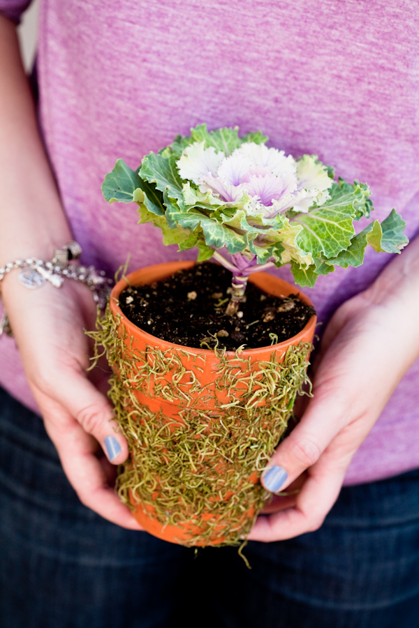 How To Make Mossy Terra Cota Flower Pots