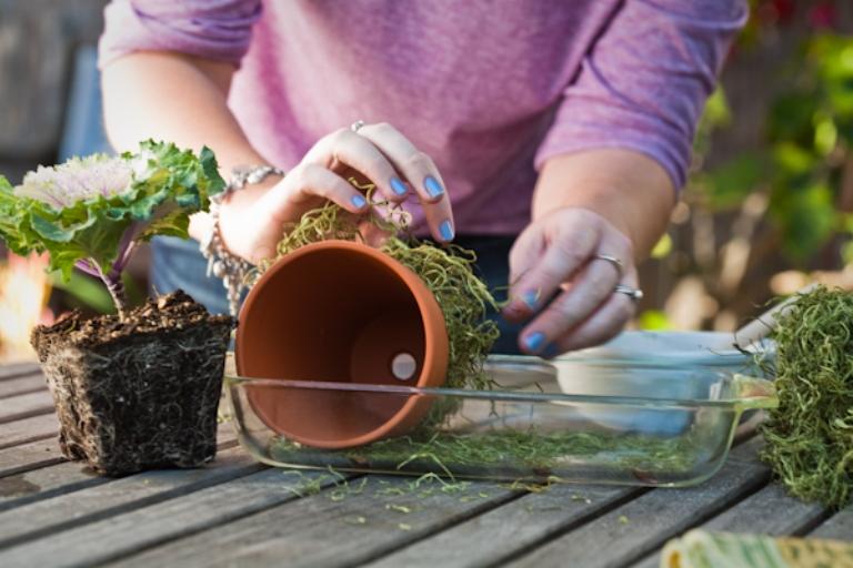 How To Make Mossy Terra Cota Flower Pots