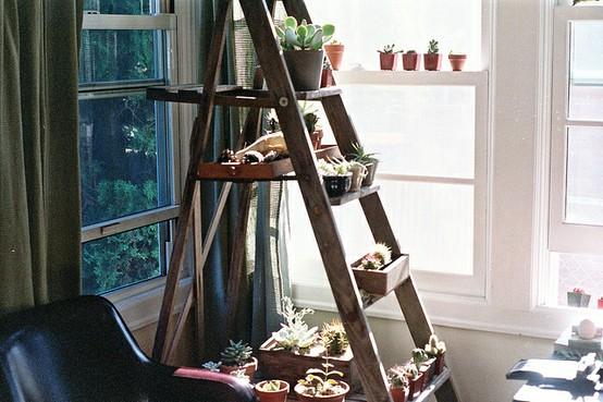 Ladders, Plants Stands, Ladders Plants, Ladders Shelf, Plants Ladders ...