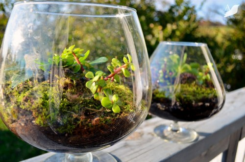 big glass terrariums