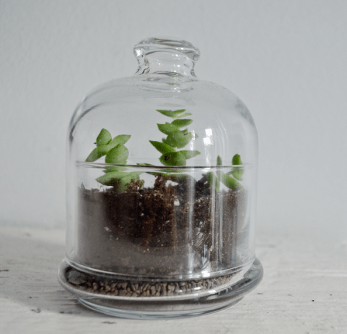 butter dish terrarium (via happinessiscreating)
