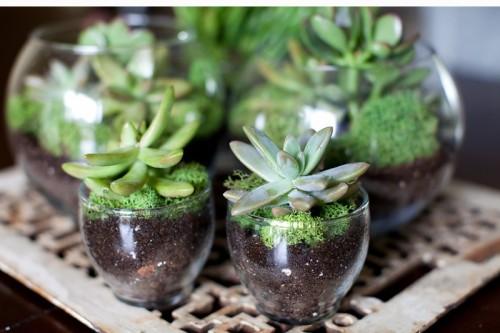 easy succulent terrarium (via kristineldridge)