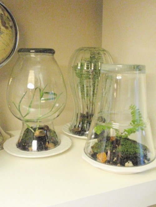 glass vases terrariums (via shelterness)
