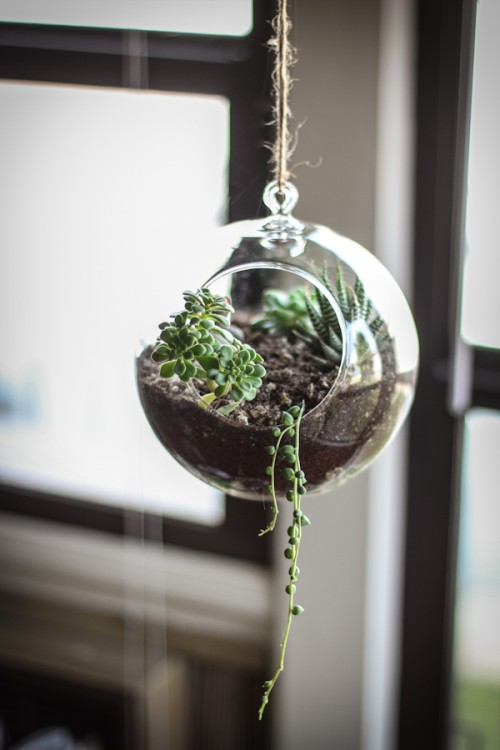 glass globe succulent terrarium (via adventures-in-cooking)