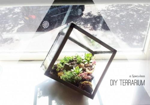 glass cube terrarium (via speculaasblog)