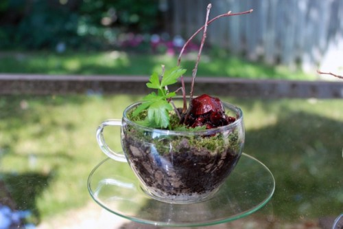 tiny moss terrariums (via shelterness)