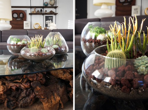 tabletop terrariums (via shelterness)