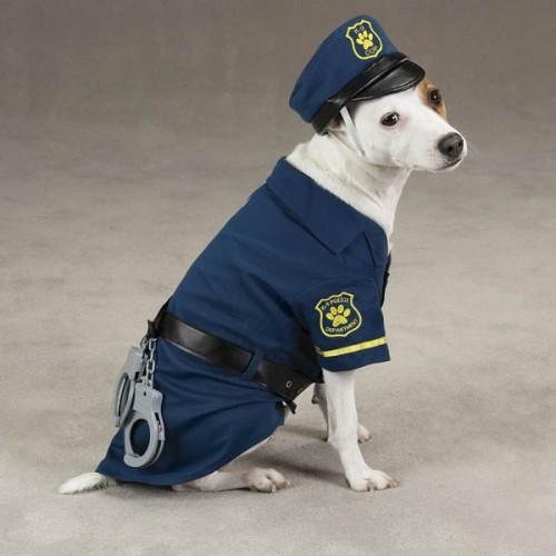 A K-9 Cop