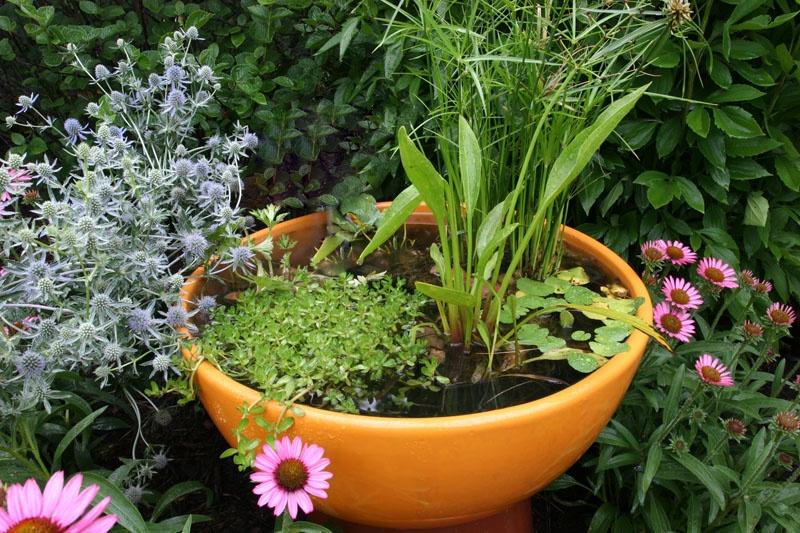 bold container water garden