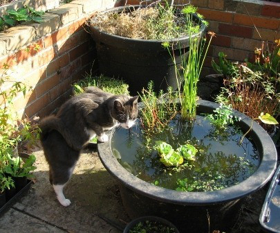 8 Refreshing Diy Container Water Gardens Shelterness