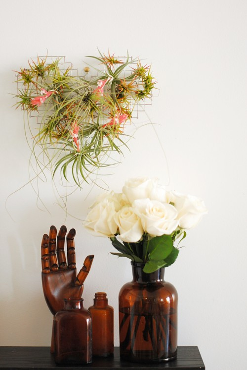 Romantic DIY Air Plants Display