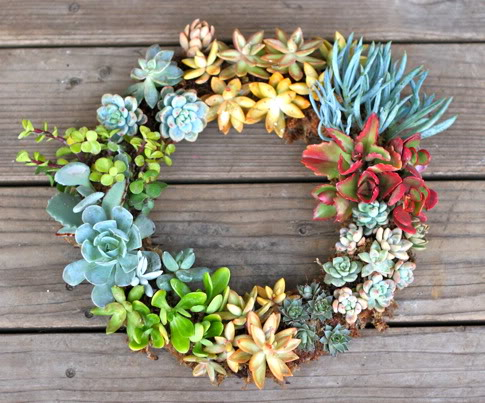 gorgeous succulent wreath (via shelterness)