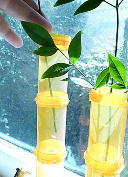 Rx Bottles Bamboo Vase