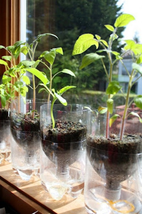 Self-Watering Planters For Starting Seeds