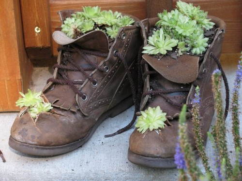 shoes diy planter gardening home creative