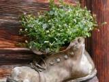 Shoes Planter